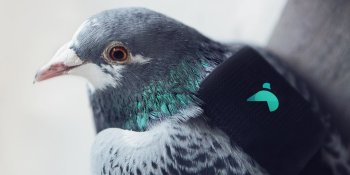 Twitter and Paris' Plume Labs launch pigeons with air pollution sensors over skies ofLondon