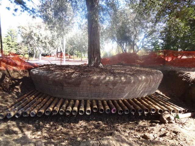 A tree being prepared for storage at the Apple Campus 2.