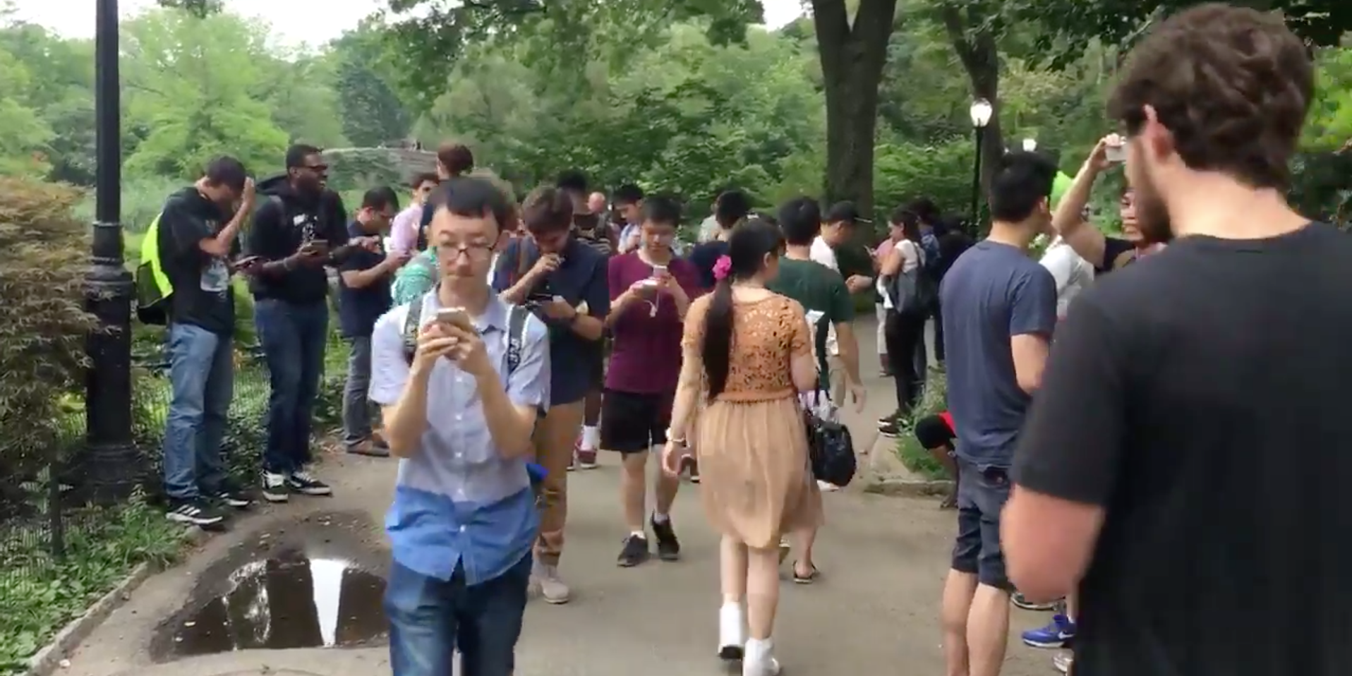 A massive crowd gathers in New York City's Central Park to catch 'em all.
