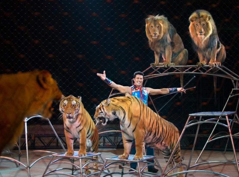 The big cats at the Ringling Bros. Barnum & Bailey Circus.