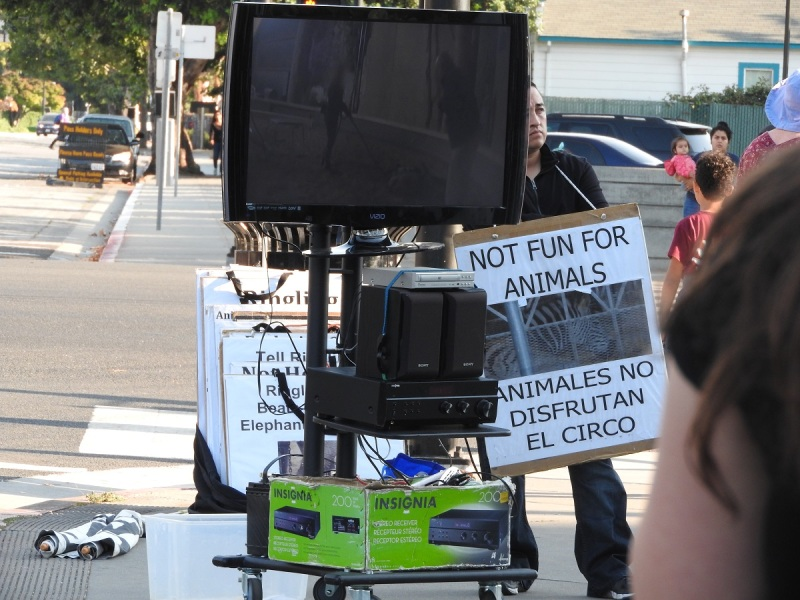There were a handful of anti-animal cruelty protesters at the Ringling Bros. show in San Jose on August 26.