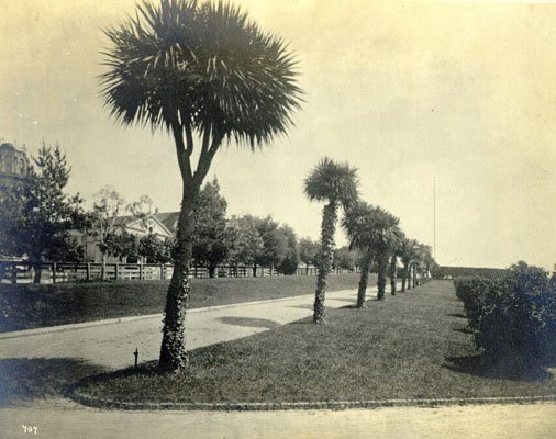 palm-avenue-in-jefferson-square-1881