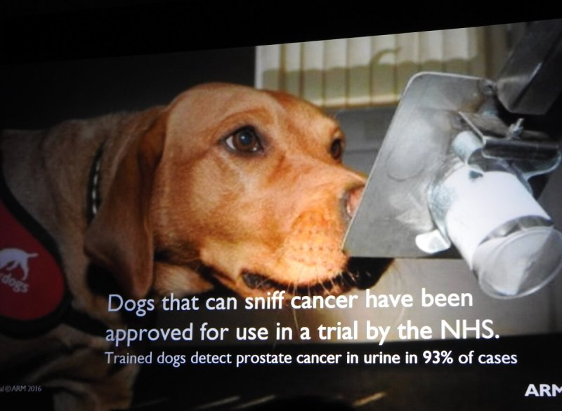 Dogs can sniff to see if your urine shows signs of prostate cancer.
