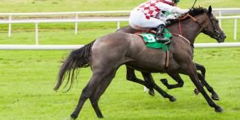 Jockeys trump horses in race to secure VC funding