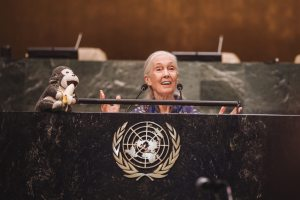 Primatologist and author Jane Goodall.