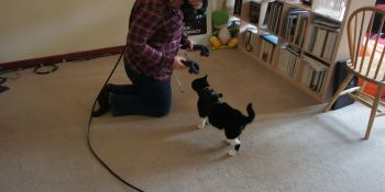 This hack enables you to see your cat when you're in VR
