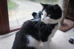 Good kitty!