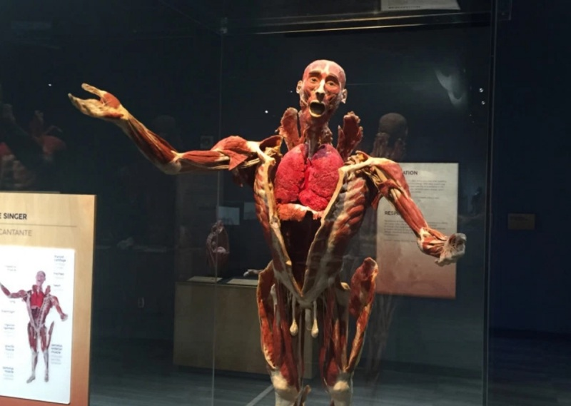 Tech Museum Embraces Augmented Reality With Body Worlds Decoded Exhibit Venturebeat