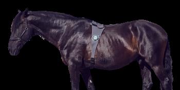 PetTech startup Piavita lassoes $5.5 million to track horse health