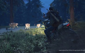 Days Gone has many dangers, like these wolves.