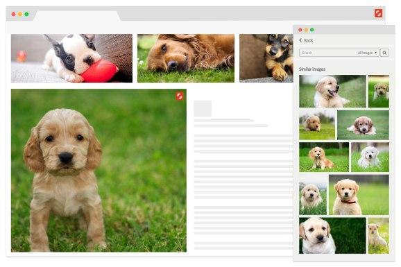 Shutterstock Reveal