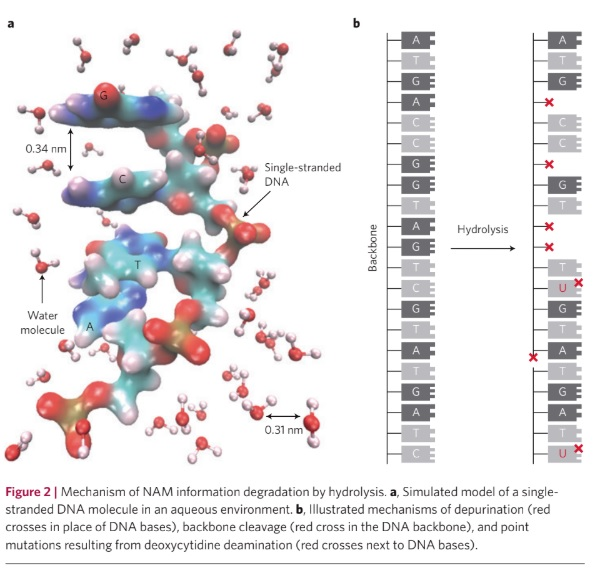 How DNA may need error correction.