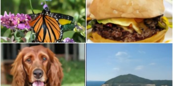 DeepMind AI can generate convincing photos of burgers, dogs, and butterflies