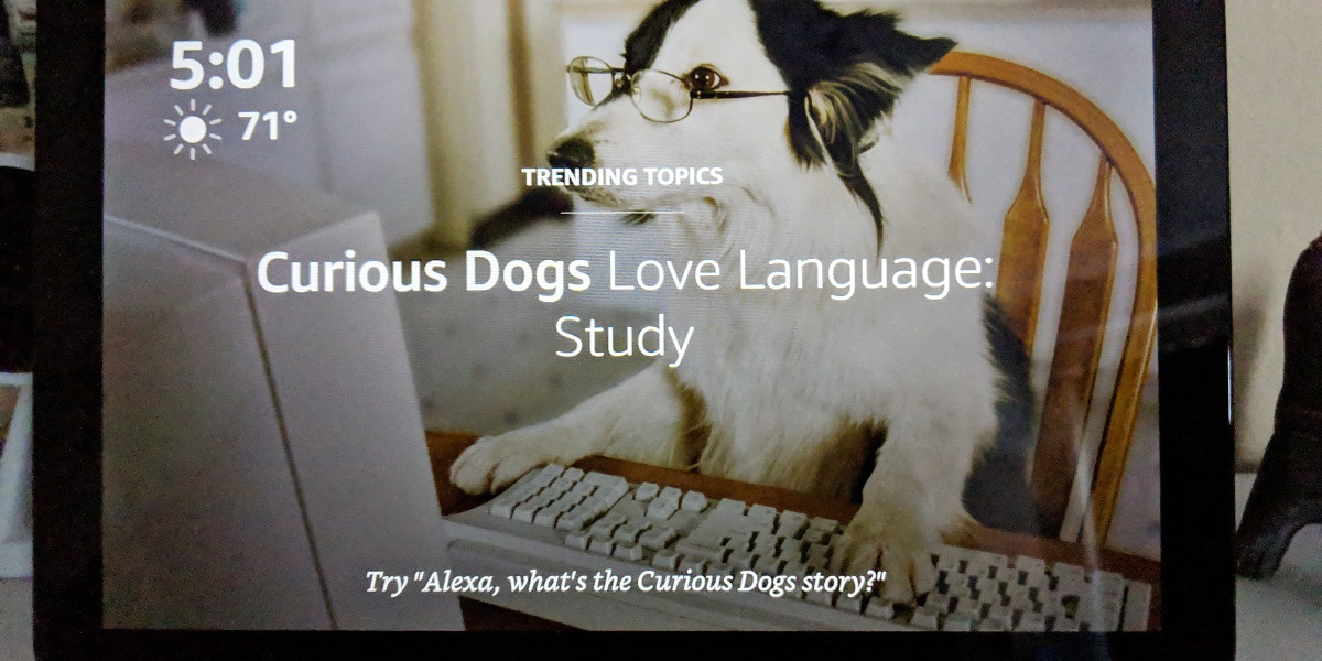 A news article about curious dogs that love language shared on the Amazon Echo Show home screen Oct.