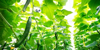 Microsoft researchers beat Tencent and Intel in autonomous greenhouse competition
