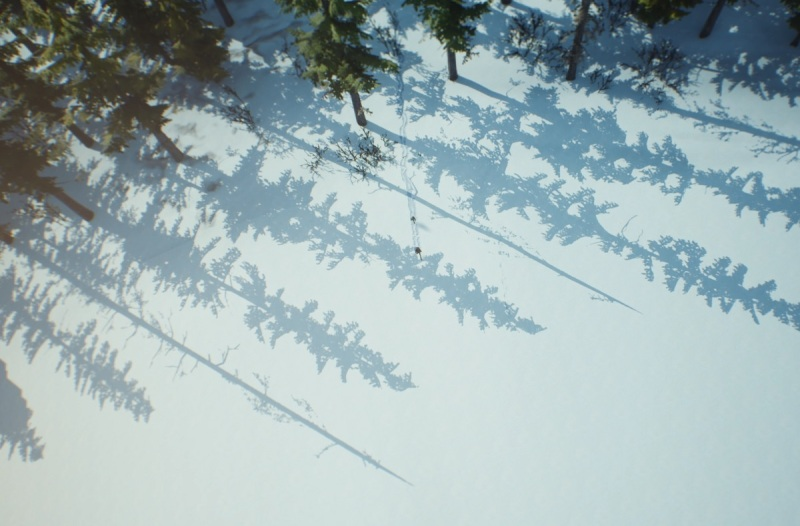 Two tiny specks in a forest.