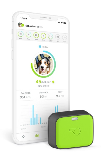 Whistle launches pet wearables for tracking location, health