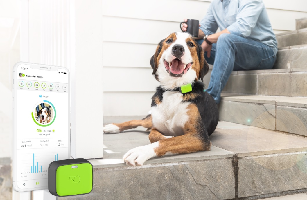 Whistle Go//Health /& Location Tracker for Pets//Taupe
