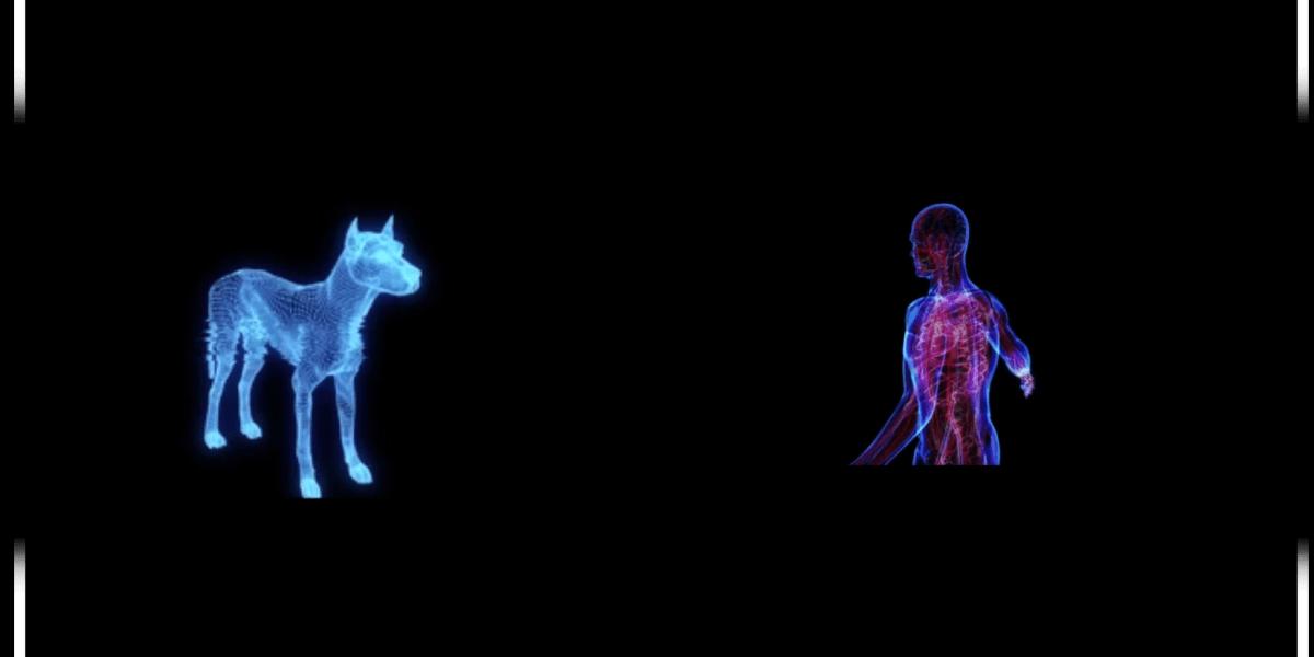 Verisim Life: Biosimulation