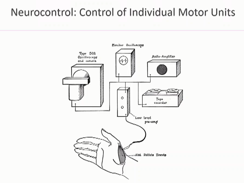 Neurocontrol: Interrogating individual neurons in the spinal cord