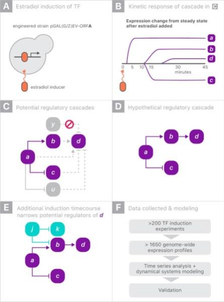 Google AI yeast gene regulation