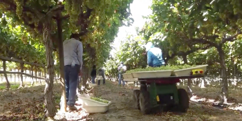 Autonomous farm robot Burro assists human workers with grape harvest