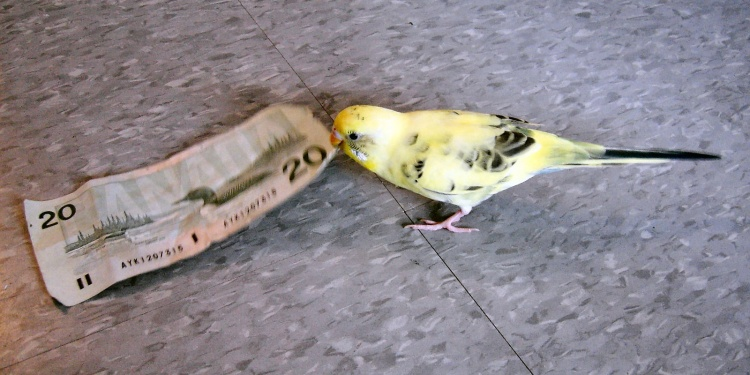 A bird with a $20 bill of Canadian money