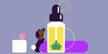 Top 3 CBD oils for dogs: 2020 review