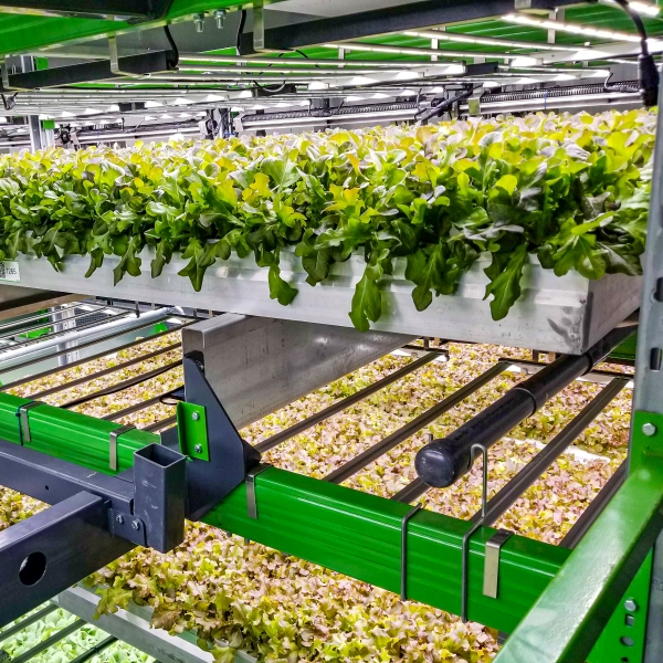 Bowery CTO Injong Rhee on the grand challenge of AI for indoor farming Baltimore Grow Room