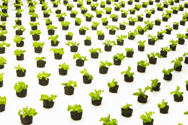 Bowery CTO Injong Rhee on the grand challenge of AI for indoor farming Bowery Farming Crops Photo Cred Courtesy of Bowery Farming