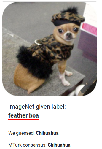 Chihuahua mislabeled as a feather boa