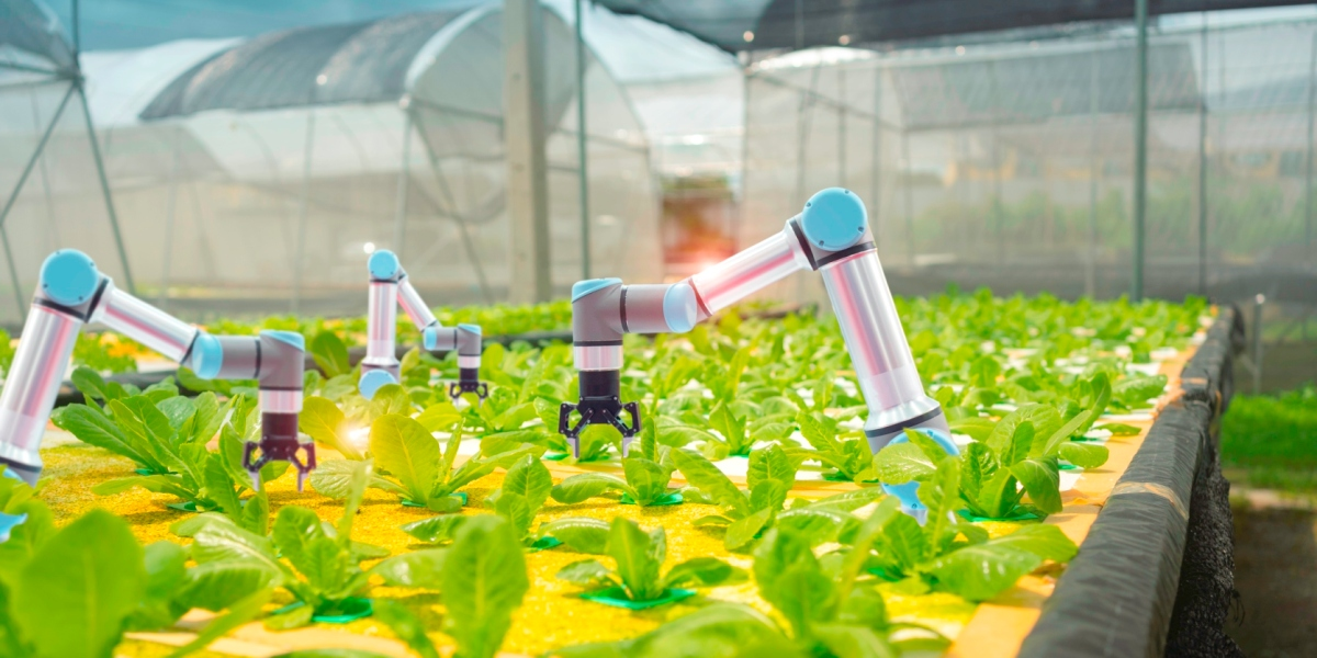 Organic agriculture concept: Smart farming agricultural technology and smart arm robots harvesting vegetables