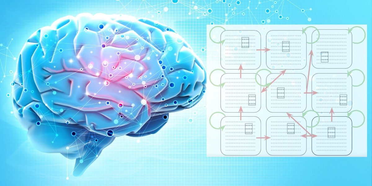 Research in the brain