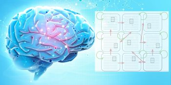A simple model of the brain provides new directions for AI research