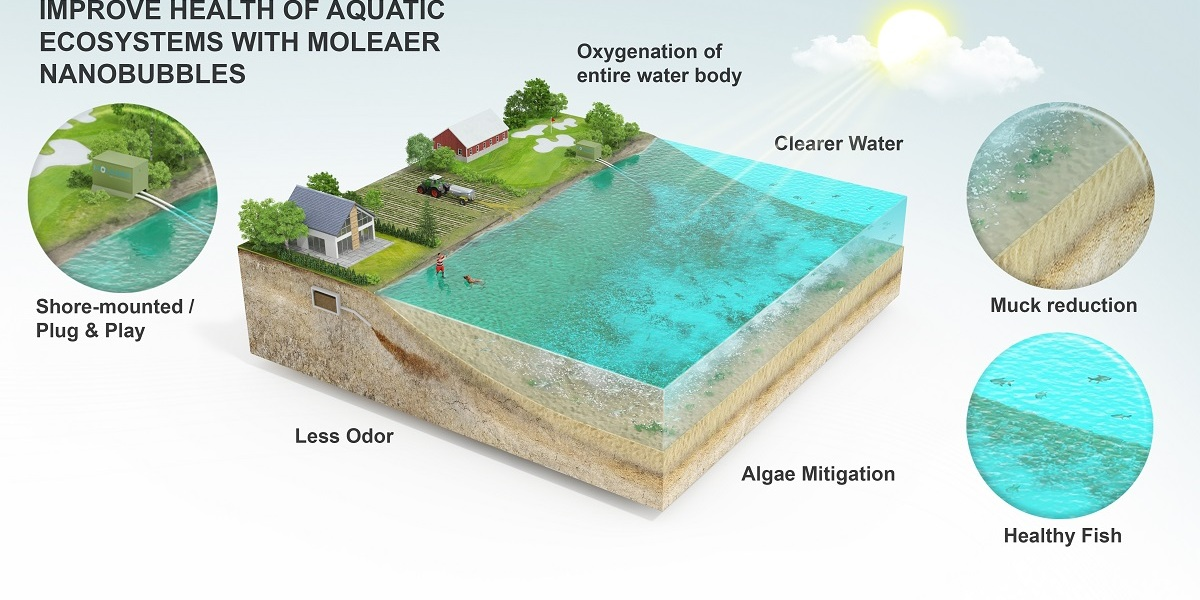 Moleaer's nanobubbles can have an amazing effect on water ecosystems.
